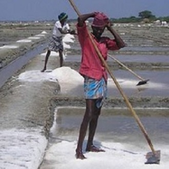 Reduction In Salt Production In Kanyakumari: Reasons [RESEARCH]