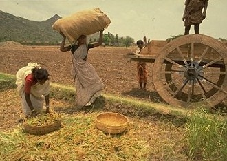 Agrarian Crisis & Food Insecurity: Feeding Off Each Other